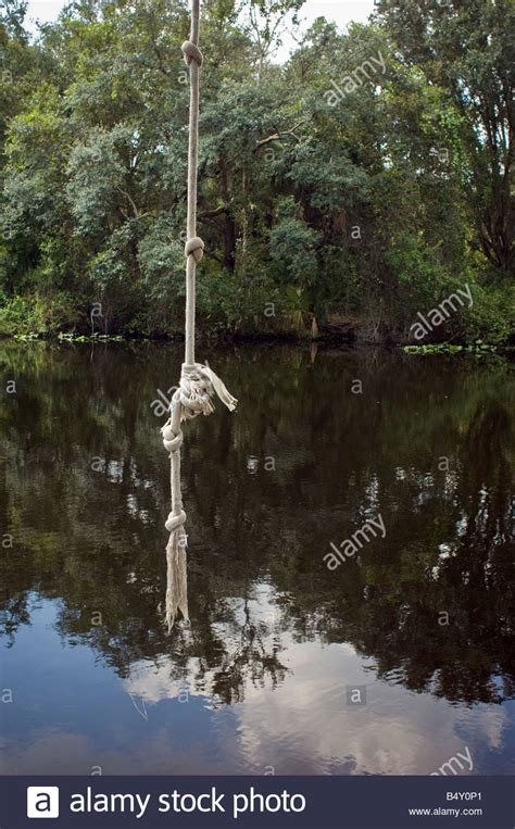 swing hanging from tree rope swing hanging from tree over river stock photo
