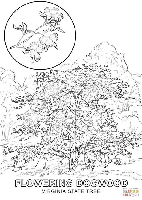 virginia state tree coloring page free printable