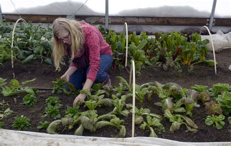 Winter Vegetable Gardening In A Greenhouse 2009 What To Grow In Winter Vegetable Garden