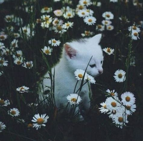 imagenes tumblr flores as margaridas tumblr