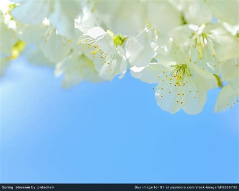 Yaymicro Free Wallpapers For Desktop Background And Free Flower Powerpoint Template Wallpapers 1280 X 1024