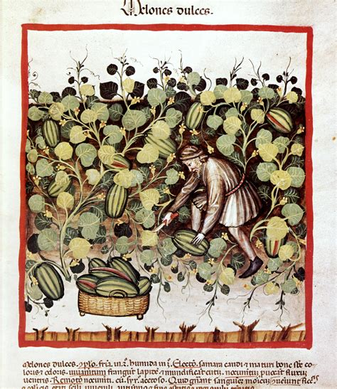 landmann feuerstelle file melones dulces wiener tacuinum jpg wikimedia commons