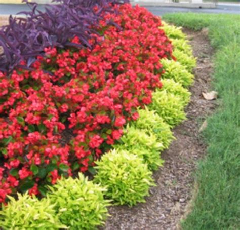 Garden Border Flowers Garden Border Flowers Flower Bed Border Ideas Alyssum Begonia And Ornamental Grass Great Color