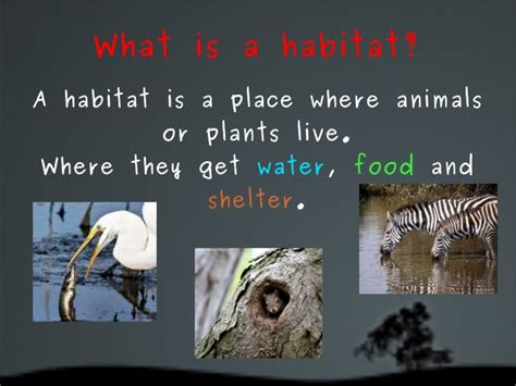 A Place What Is It Animals Habitats