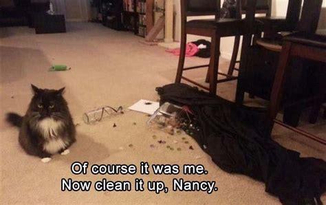 clean animal memes      laugh