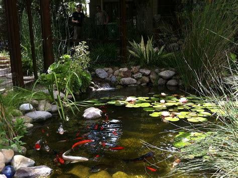 backyard coy ponds water gardens koi fish pond koi ponds pinterest