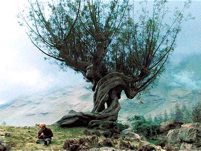 whomping willow tattoo tree of the month the whomping willow megan trees