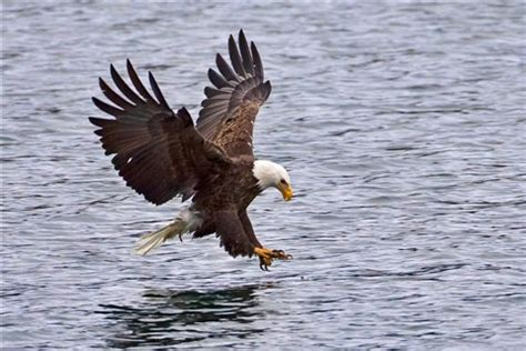 eagle pick up 1: ben_egbert: galleries: digital