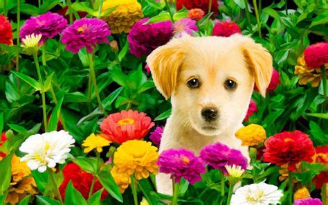 puppies and flowers puppy flower home pets wallpaper