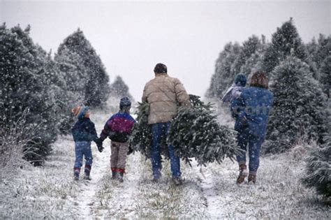 cut down your own christmas tree edmonton tree cutting permits bison ridge hoa