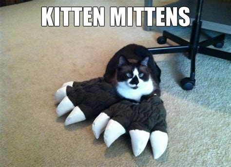 Kitten Meme - funny 2014 kitten meme and lol jpg