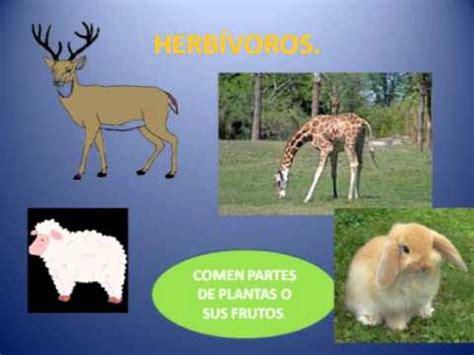 animales herbÍvoros, omnÍvoros y carnÍvoros youtube
