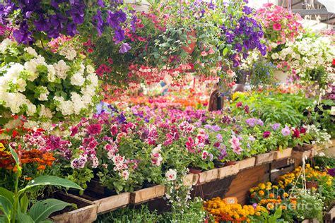 flower store flower store flower market photograph by boris suntsov