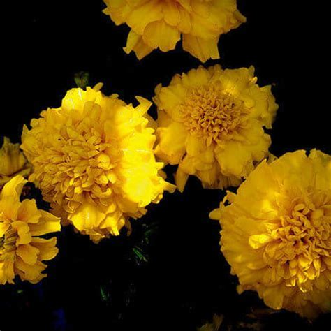 Top 25 Most Beautiful Yellow Flowers