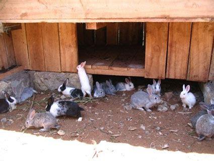 backyard rabbit farming backyard rabbit farming www pixshark com images