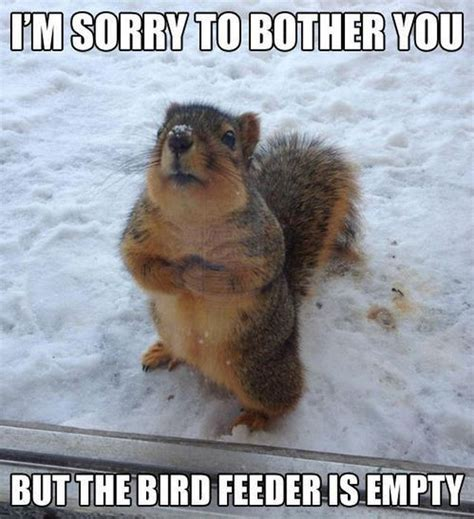 Funny Caption Memes - best 25 funny animals with captions ideas on pinterest