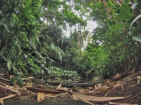 Jungle Floor jungle floor jungle jungles floors and