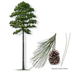 Texas State Bird Flower Tree - untitled flashcards biochemistry 402 with labrador at