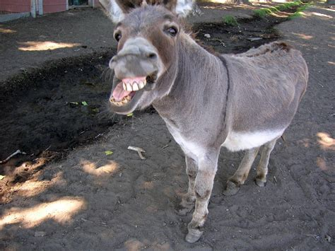 The Blind Burro Dom Hates Animals 42 Donkey