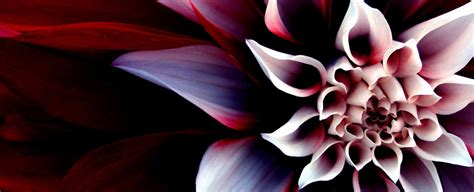 lotus flower cover photo девушка живущая в сети