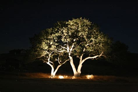 outdoor lighting trees home decoration club