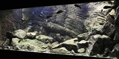 cichlid aquascape 306 best images about fish tank visions on pinterest