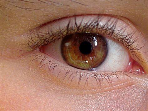 imagenes ojos humanos fotos curiosidades sobre los ojos 191 cu 225 ntos colores