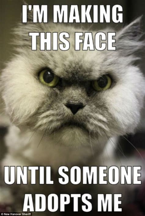 Angry Cat Meme Good - the kind family who have taken in unadoptable stray