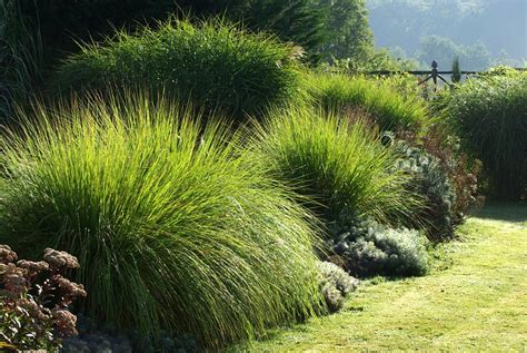 Massif Plantes Contemporain by Graminees Au Jardin Contemporain Jardin