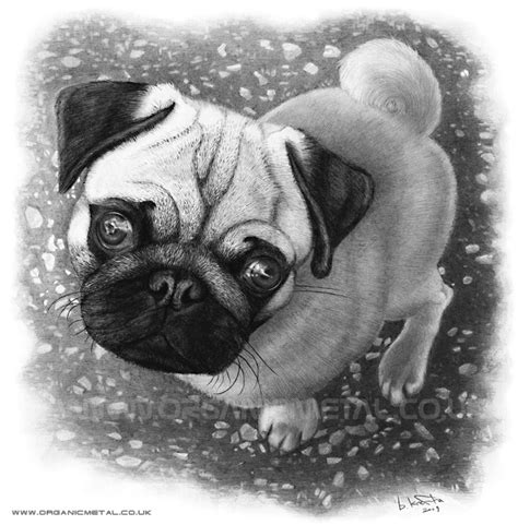 can pugs pop out the pug by bomu on deviantart