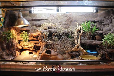 Leopard Gecko 2 leopardgecko bariol 233 reptiles and hibians