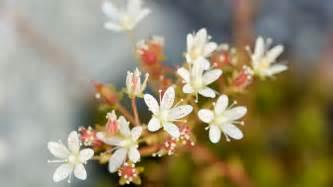 free desktop hd 3d full screen flowers wallpapers download