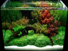 home accessories cool aquarium decorations how to build