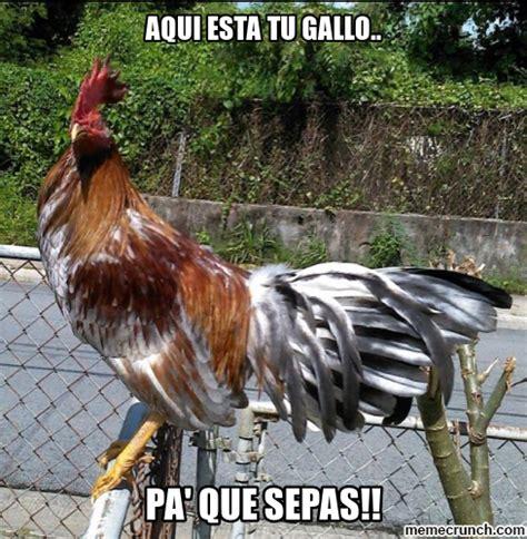 imagenes de gallos con frases newhairstylesformen2014 com imagenes de gallos con frases graciosas im 225 genes y