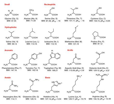 diagram of amino acid amino acids proteins