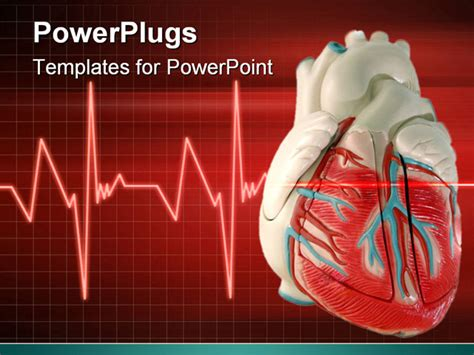 free cardiac powerpoint templates this is a anatomically correct model of the
