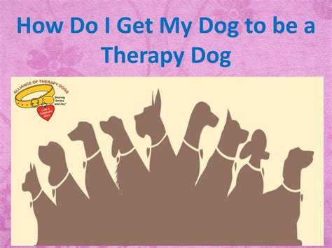 how do dogs be ppt how do i get my to be a therapy powerpoint presentation id 7557450