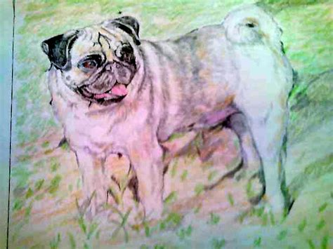 heavenly pugs of referralspage