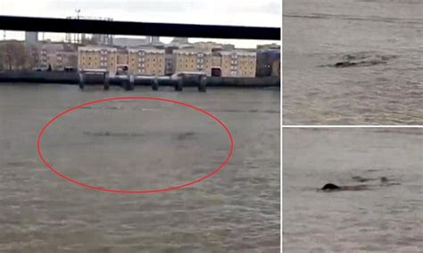 london thames monster second loch ness monster video swimming in the thames