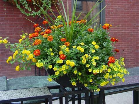 fiori per fioriere fiori per fioriere fiori sceglier ei fiori per le fioriere