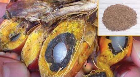 Harga Bungkil Kedelai 2016 bungkil inti sawit untuk pakan ternak