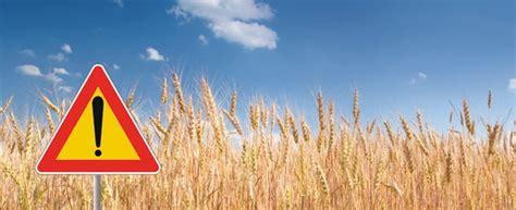 in quali alimenti si trova il glutine la celiachia che cosa 232 e dove si trova