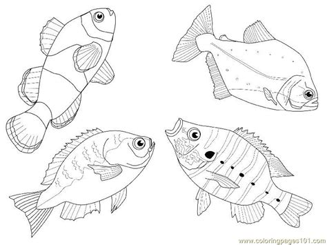 4 Fishes Different Views Coloring Page Free Other Fish Different Coloring Pages