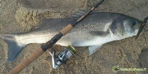 pesca spigola porto cosa fare per pescare la spigola in mare