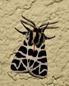 St Tiger Mocha radiolaria ceramic necklace in mocha crackle ceramic