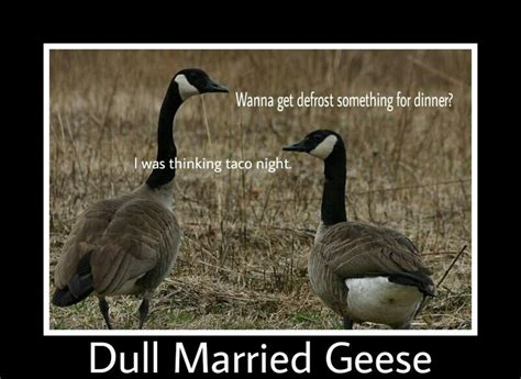 Silly Goose Meme - geese meme related keywords geese meme long tail