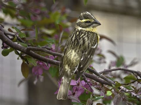 115 best birds to see in northern nevada california images