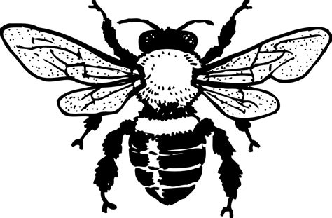 Free vector graphic: Honey Bee, Insect, Drawing - Free ... Insect Drawings Clip Art