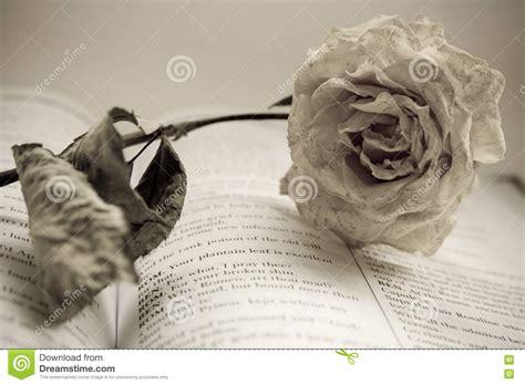 libro alguien esta mintiendo la rosa seca est 225 mintiendo en el libro 16557890 jpg