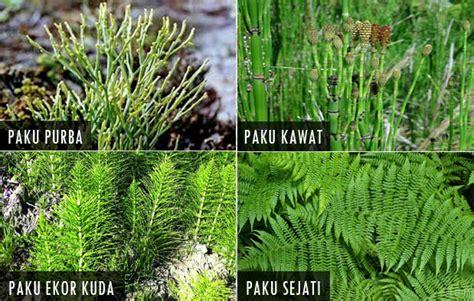 pengertian ciri ciri dan klasifikasi kingdom plantae tumbuhan materi belajar